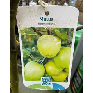 Malus Domestica Apple