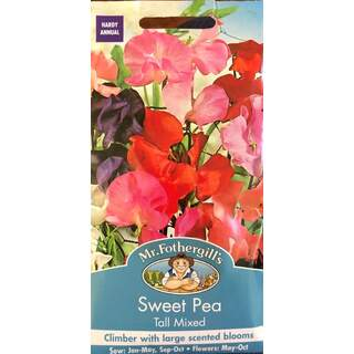 UK/FO-SWEET PEA Tall Mixed