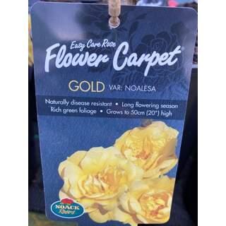 FLOWER CARPET GOLD