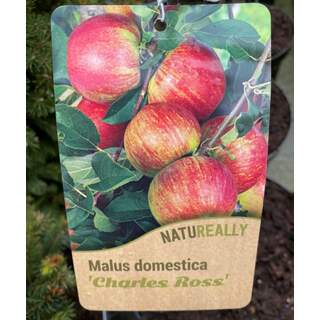 Malus d.  Charles Ross  Apple
