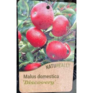 Malus d.  Discovery  Apple