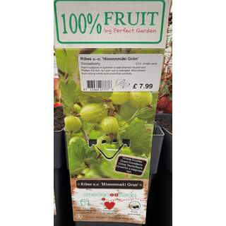 Ribes Hinnonmaki Gron 2 Ltr - Gooseberry