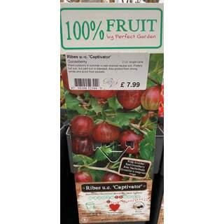 Ribes Captivator 2 Ltr - Gooseberry
