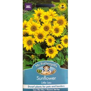 UK/FO-SUNFLOWER Little Leo