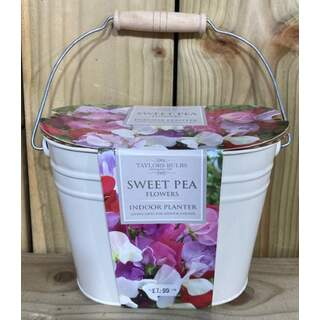Sweet Pea Planter