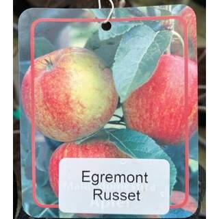 Malus d.  Egremont Russet