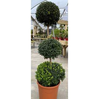 Trio Buxus Ball Stand. 12 Ltr
