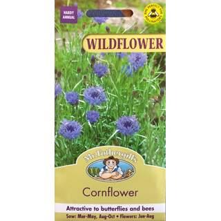 UK/FO-WF Cornflower