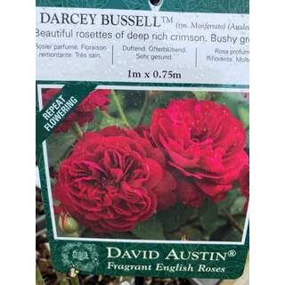 BUSH ROSA DARCEY BUSSEL